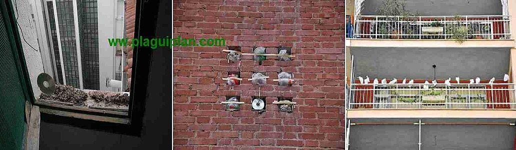 Control de palomas y aves urbanas