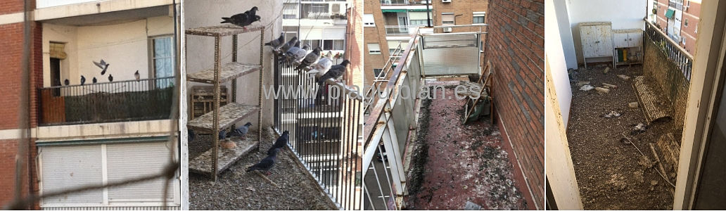Problema de palomas terraza o balcón de vivienda