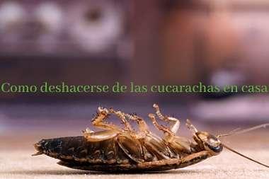 Como-Deshacerse-De-Las-Cucarachas- en-casa