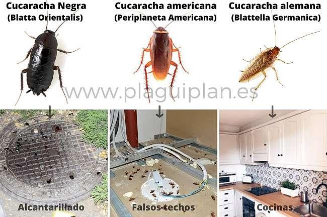 Control de plagas de cucarachas para comunidades