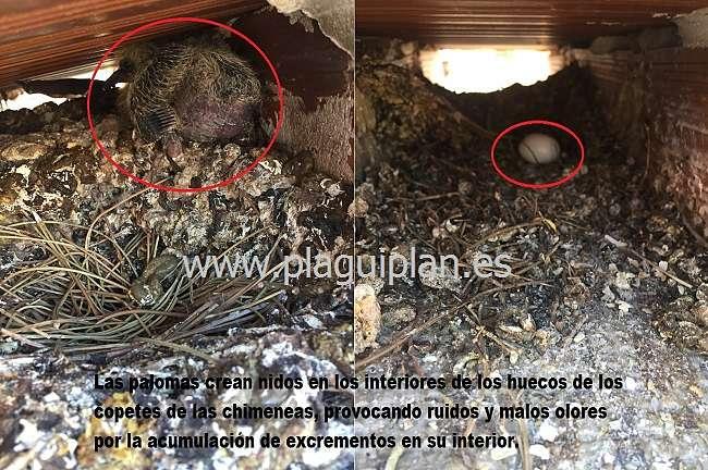 Daños causados por las Palomas en los sistemas de ventilación y chimeneas