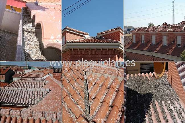 Daños por las Palomas en los tejados