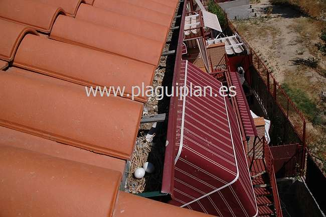 Daños causados por las Palomas en los techos de las casas
