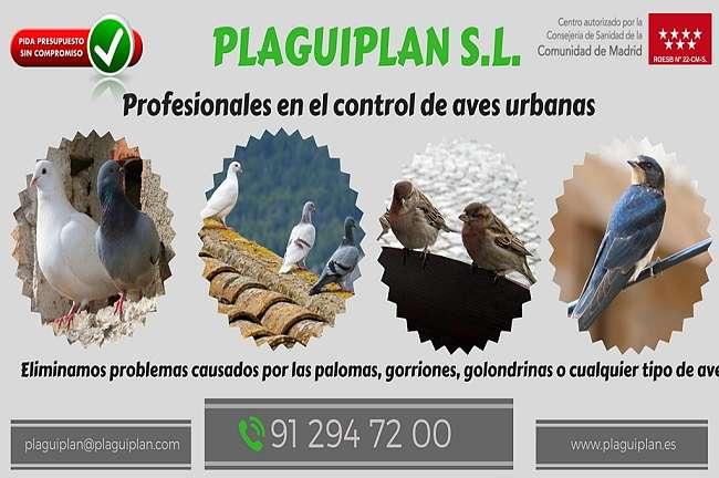 Profesionales en control de aves