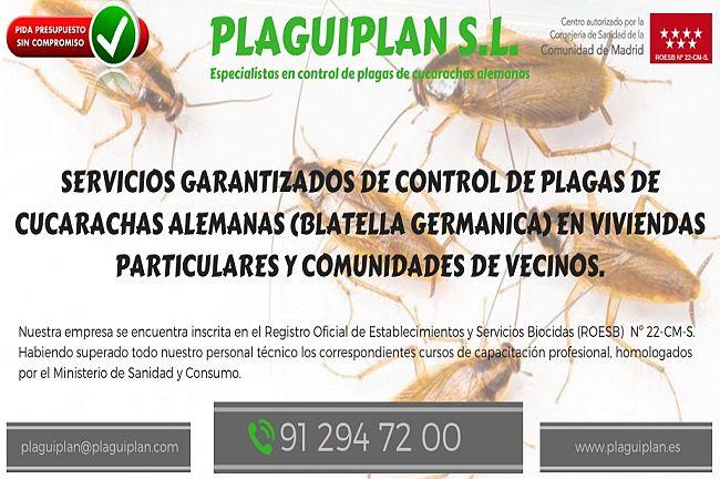 Especialistas en control de plagas cucarachas alemanas