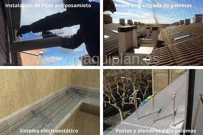 Medidas de control y eliminación de palomas