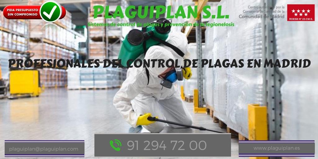 Control de plagas en Madrid