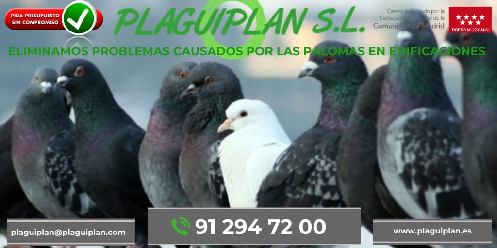 control-plagas-palomas-madrid