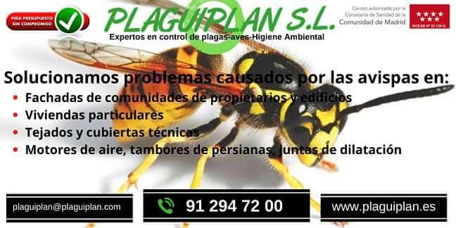 control-de-plagas-avispas