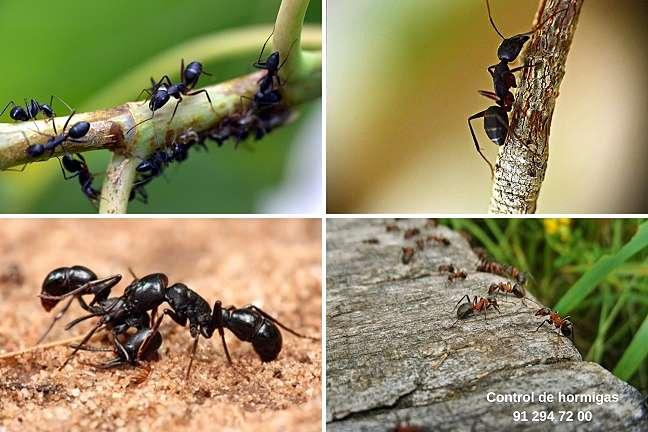 eliminar hormigas del jardin