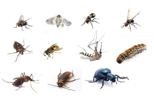 Cómo-controlar-las-plagas-más-molestas-en primavera-y-verano