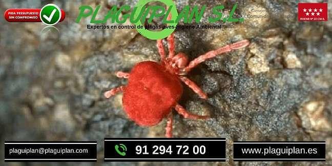 Cómo-me-deshago-de-los-ácaros-arañas-rojos