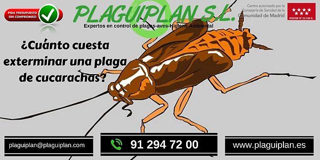 Cuánto-cuesta-exterminar-una-plaga-de- cucarachas
