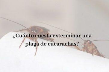 Cuánto cuesta exterminar una plaga de cucarachas