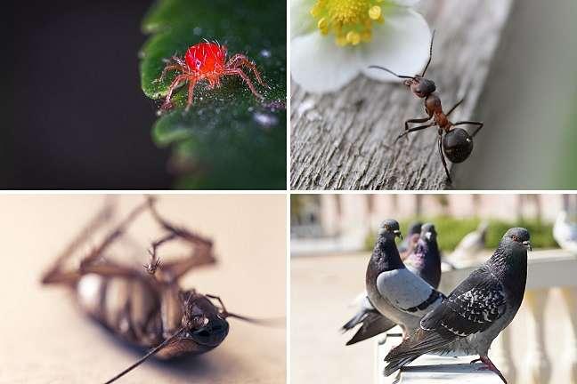 pequeños-bichos-rojos-y-otras-plagas- primaverales
