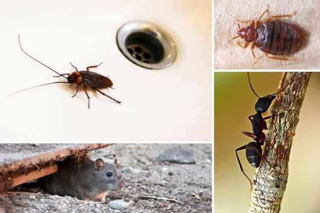 Qué-plagas-son-las-más-comunes-en-Madrid