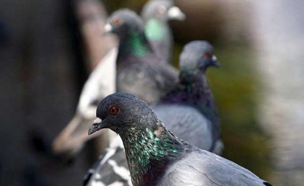 clave-mantener-aves-plaga-alejadas-negocio-en Madrid