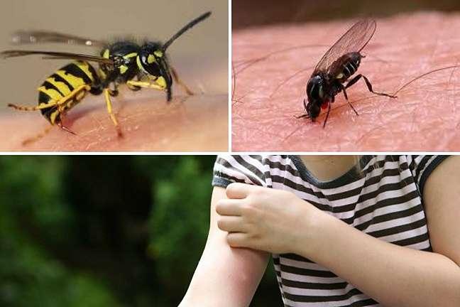 como-evitar-picaduras-y-mordeduras- de-insectos