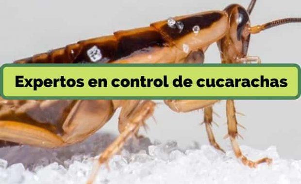 expertos-en-control-de-cucarachas