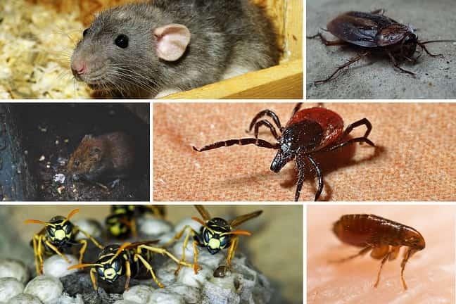 Plagas-en-madrid-que-deben-evitarse-este-otoño