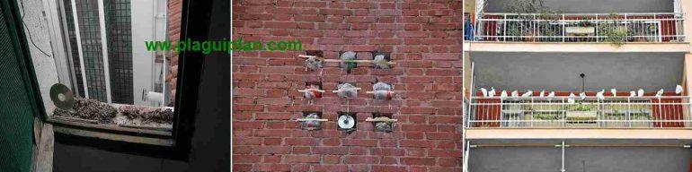 Metodos caseros de control de palomas que no funcionan